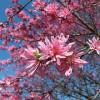 今年は、いろんなカメラで桜を撮ってみたよ