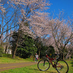 S90で桜