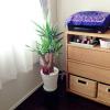 インテリアの観葉植物をとりあえず設置