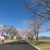 研究学園 学園の杜公園の桜